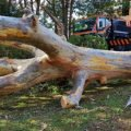 Large Tree Removal Specialist Western Sydney
