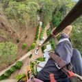 Large Tree Removal Specialist Blue Mountains, Penrith, Hawkesbury