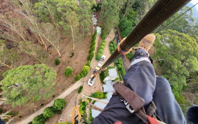 Best Time For Tree Pruning