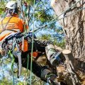 Tree Services Blue Mountains