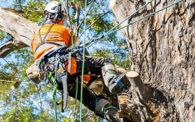 Why You Need Prompt Tree Services in Winter