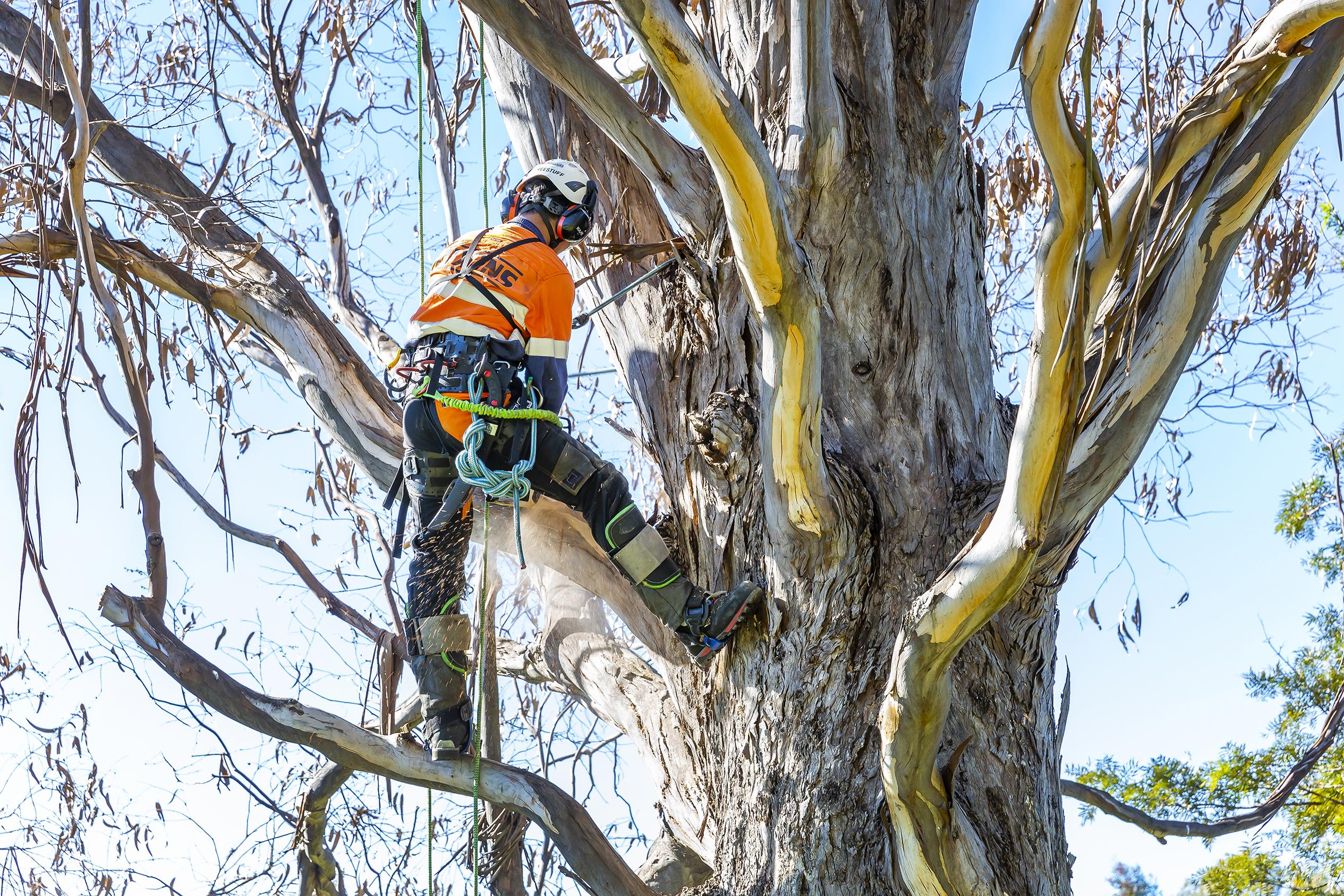 Tree Health & Hazard Assessmen