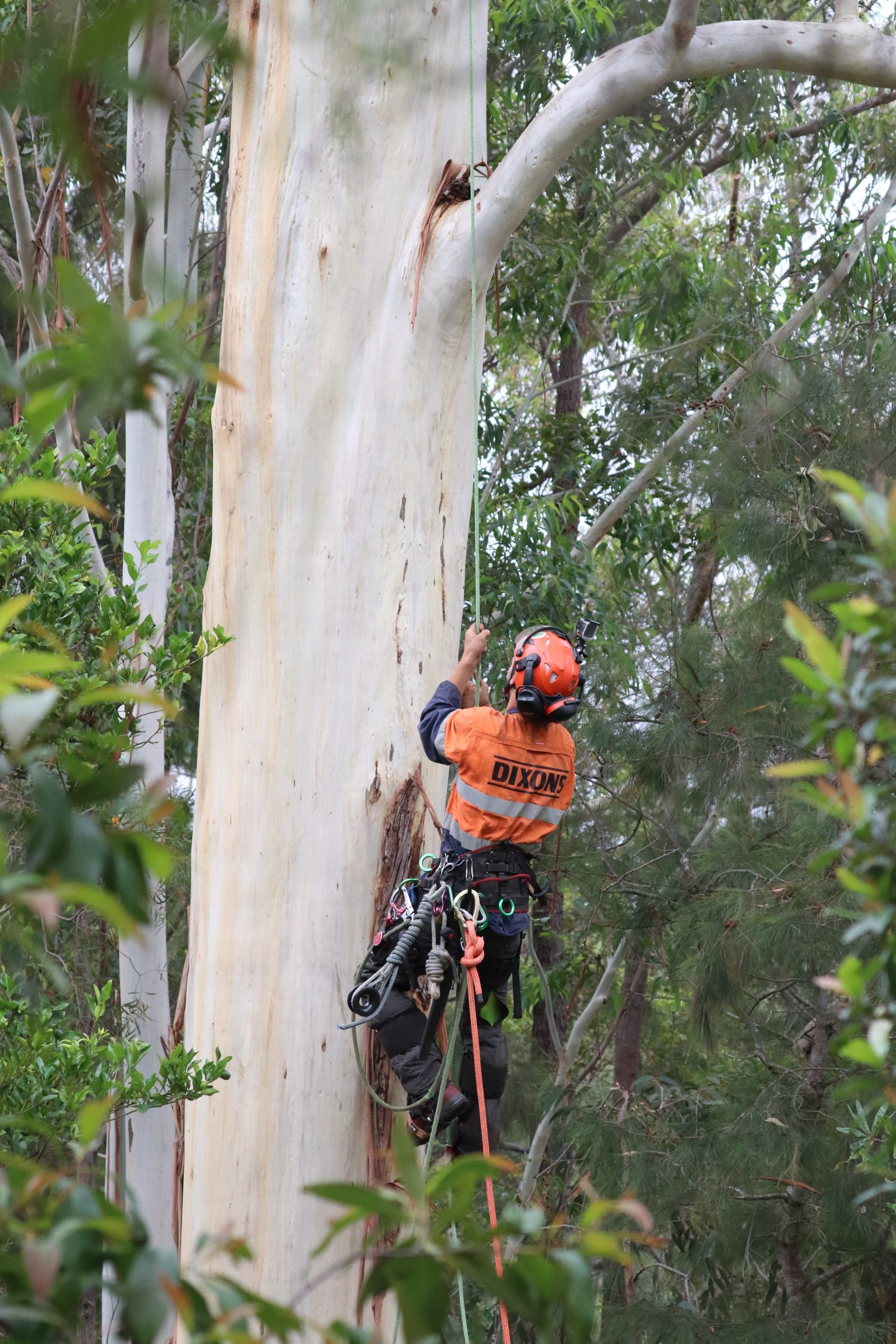 Using Crane to remove Dangerous Tree Banch Blue Mountains